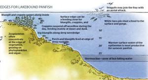 Edges-for-Lakebound-Panfish In Fisherman