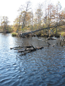 Fallen-Tree-Crappie-Cover-In-Fisherman