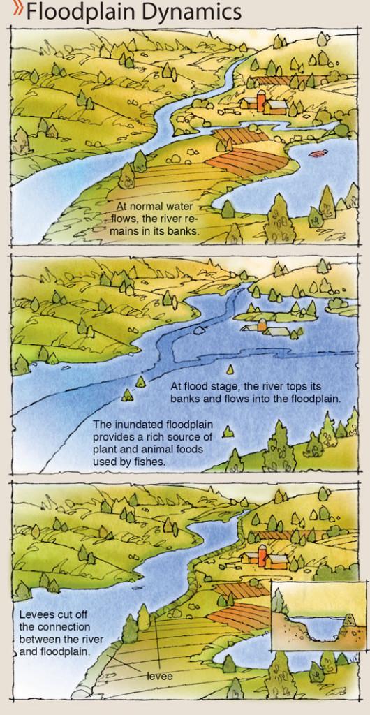 Floodplain-Dynamics-In-Fisherman