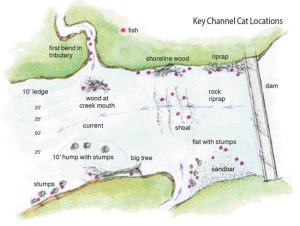 Key-Channel-Cat-Locations-Illustration-In-Fisherman