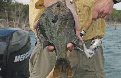 On-Edge-for-Panfish-Feature-In-Fisherman