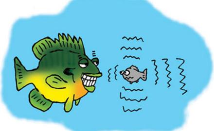 Panfish-Foot-Prints-Panfish-Finger-Prints-Feature-In-Fisherman