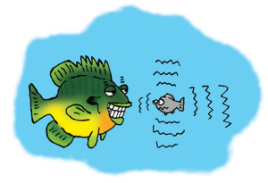 Quivering-Minnow-Illustration-In-Fisherman