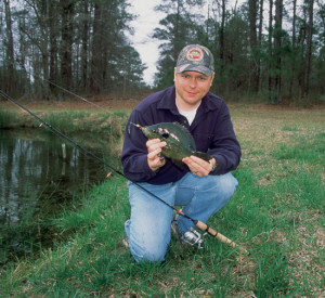 Shellcrackers are routinely stocked with bluegill in ponds throughout the Southeast.