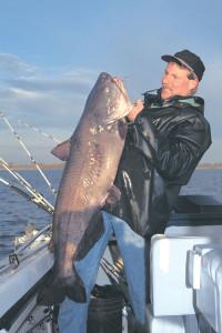Sunny-Blue-Catfish-Lead-In-Fisherman