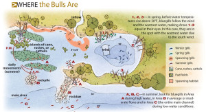 Where-The-Bulls-Are-Illustration-In-Fisherman