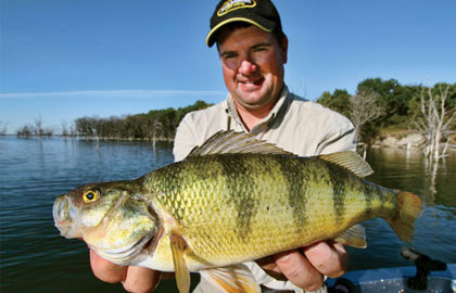 Here's a look at some of the best perch locations in the United States and Canada. Whether your