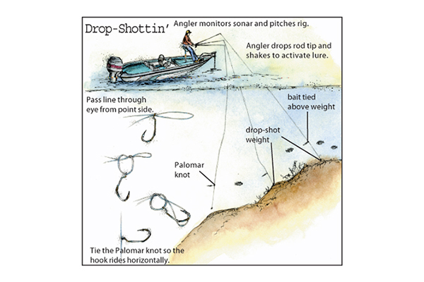 Drop shotting for walleyes in fisherman for Drop shot fishing