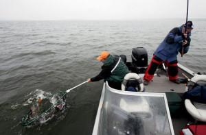 Boatside-Net-Lead-In-Fisherman