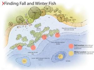 Fall Channel Catfish