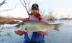 //www.in-fisherman.com/files/2014/10/Hybrid-Stripers-Ice-Fishing-In-Fisherman-300x178.jpg