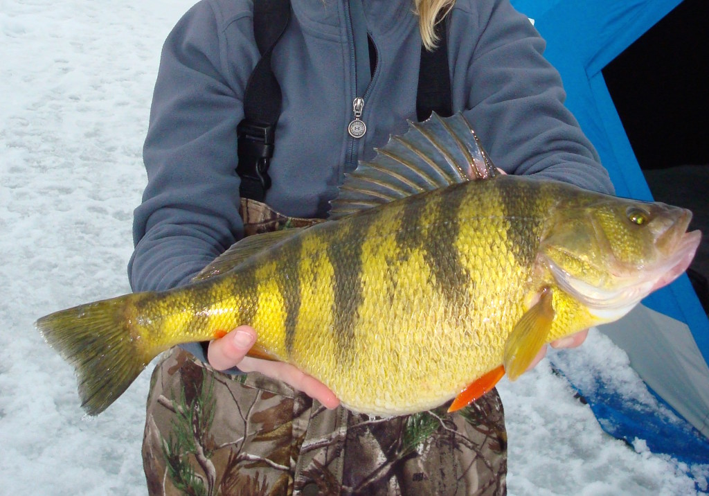 Idaho girl ices world record perch in fisherman for Ice fishing indiana