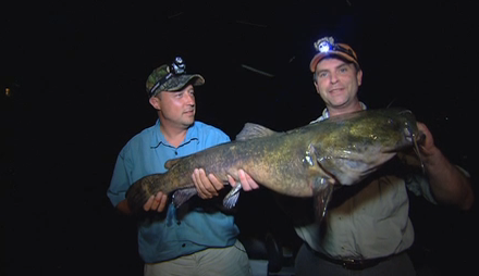Record Catfish: Giant Flatheads - In-Fisherman - photo#41