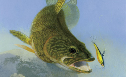 Spring walleye fishing often means large numbers of fish concentrated in small areas. The typical