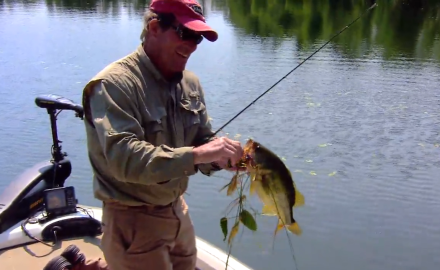 The In-Fisherman staff highlights two hot new softbaits for big bass.