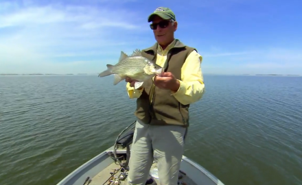 Prespawn white bass is one of the most guaranteed predictable fast-action bites in freshwater.
