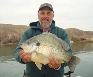 Giant Panfish
