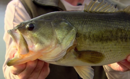 Doug Stange heads south for small water fast-action largemouth bass.