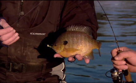 The In-Fisherman staff highlights the heart of winter fishing, as they ice bull bluegills from