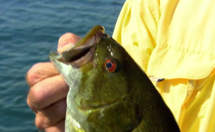 The In-Fisherman staff makes magic with new lures and fishing options for smallmouth bass.