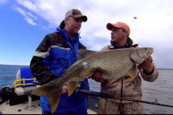 Cree lake lake trout