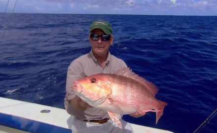 Gulf Coast red snapper