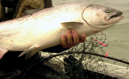 The In-Fisherman staff travels to world-class fishing destinations, as they fish for Columbia king