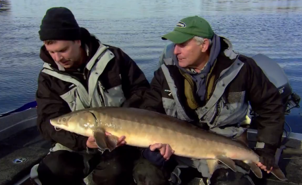 The In-Fisherman staff goes into bruiser-fish mode, as they talk conservation and wrestle with lake sturgeon.