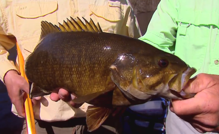The In-Fisherman staff slips into slight-of-hand mode, wacky rigging for river smallmouths.