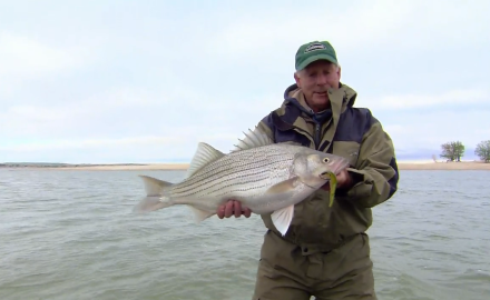 The In-Fisherman staff goes in search of monster sportfish, as they cast Magic Swimmers for hybrid
