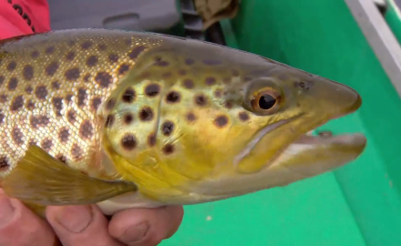 Lures for River Brown Trout