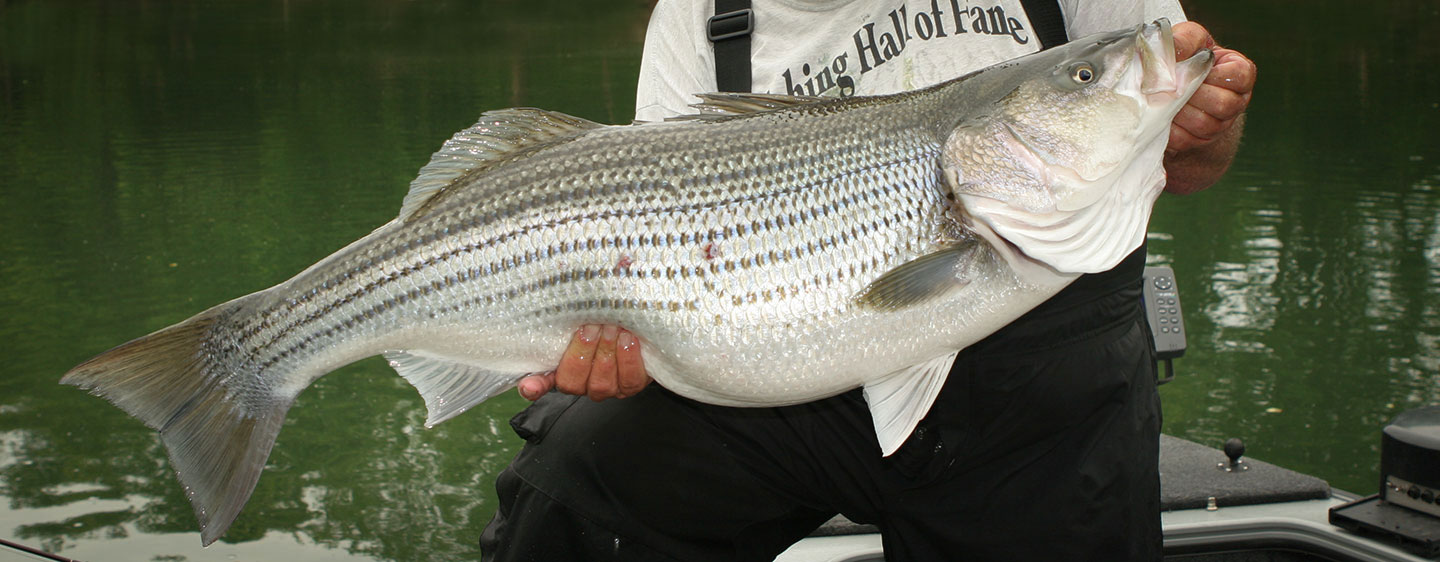 Must-Have Striped Bass Tackle