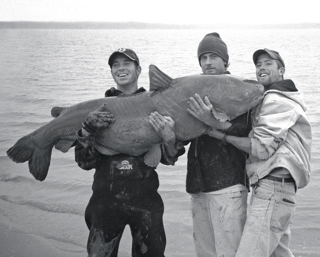Giant Catfish From Shore