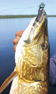 Great Lakes Pike