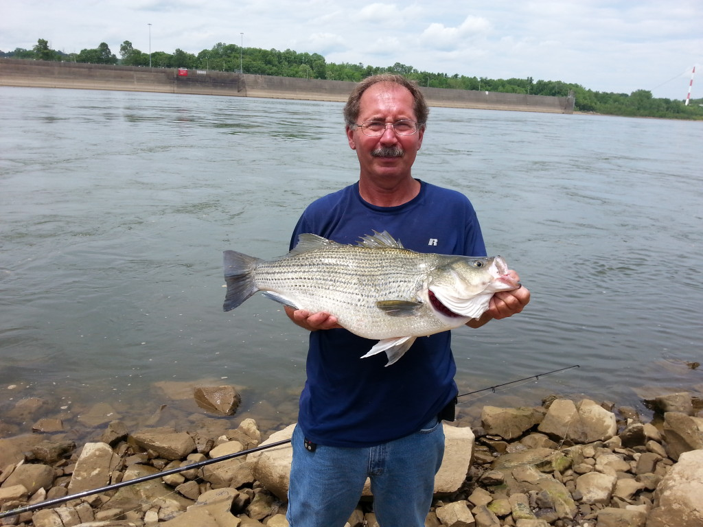 ohio river tail water fishing in fisherman