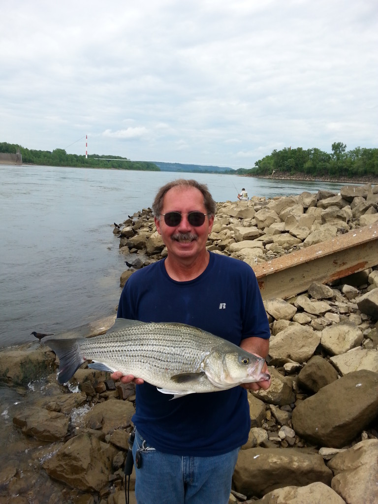 Ohio river hybrid striped bass in fisherman for Ohio river fish