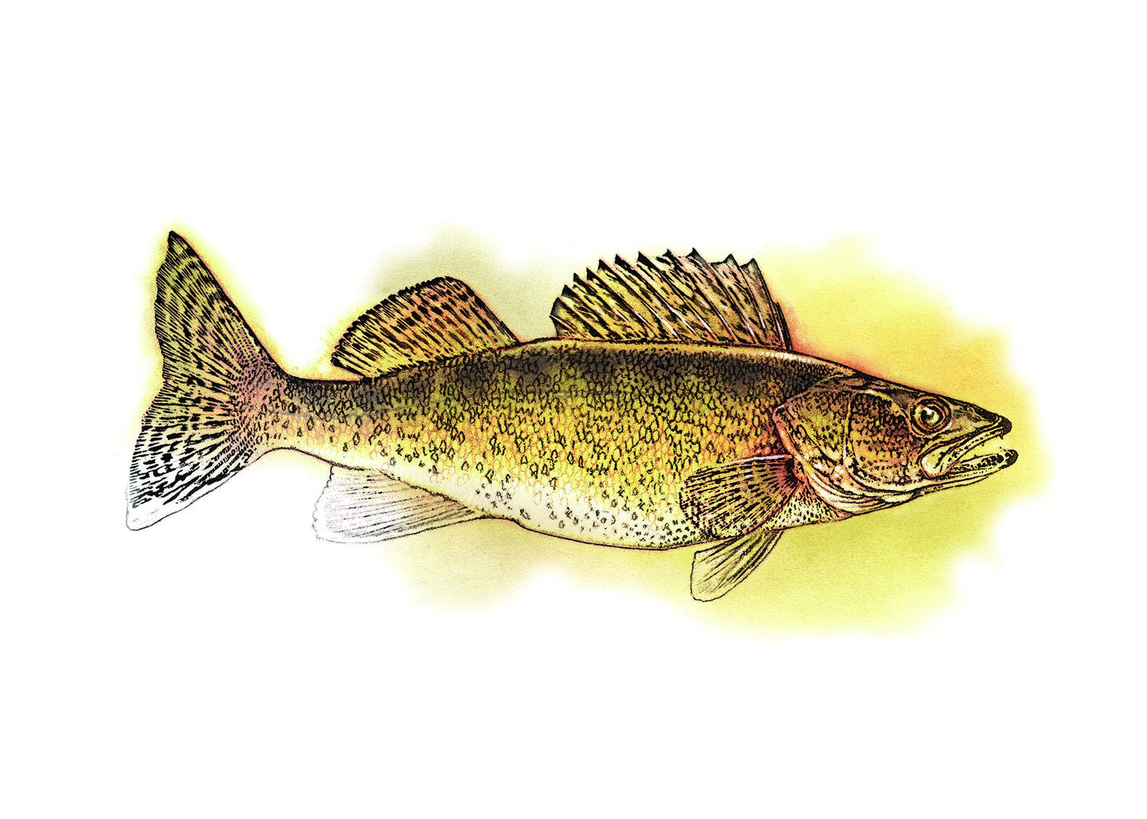 One Angler's Evolution
