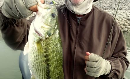 Norman Brown with one of the 32 smallmouth bass that he and Steve Reideler caught on Nov. 2.  This