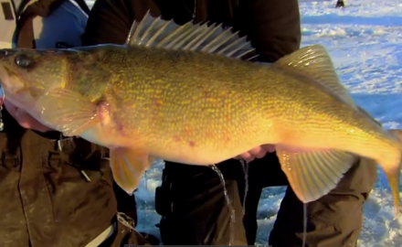 Checkout this seasonal trek across the ice belt chasing giant walleyes!