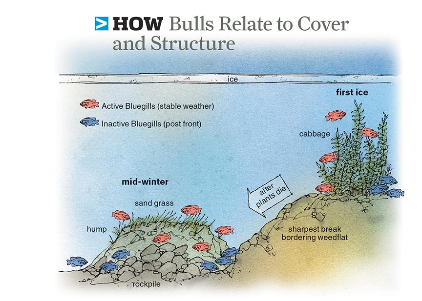 HowBluegillsRelateToCover