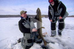 The In-Fisherman staff targets giant pike through the ice, catching one monster after another using tip-ups and quick-strike rigs.