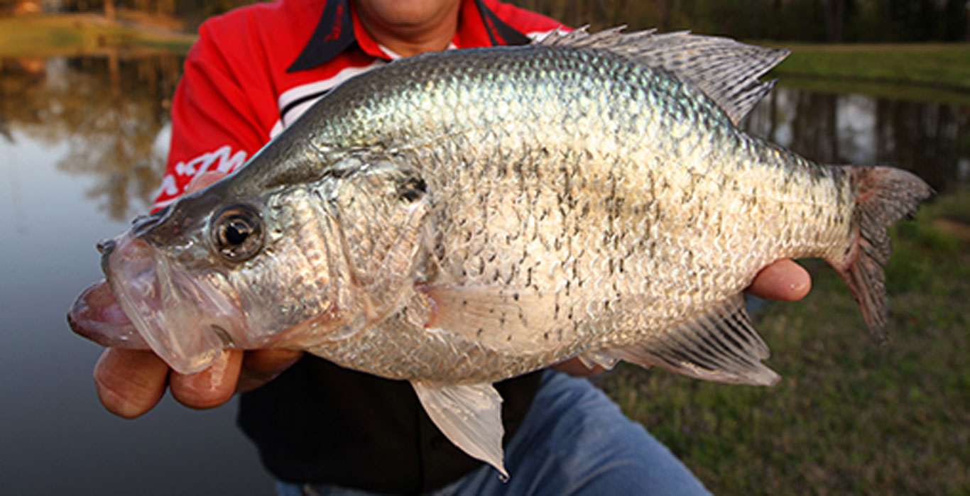 Crappie-Length-To-Weight-Conversion-Chart