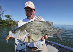White Bass Length To Weight Conversion Chart