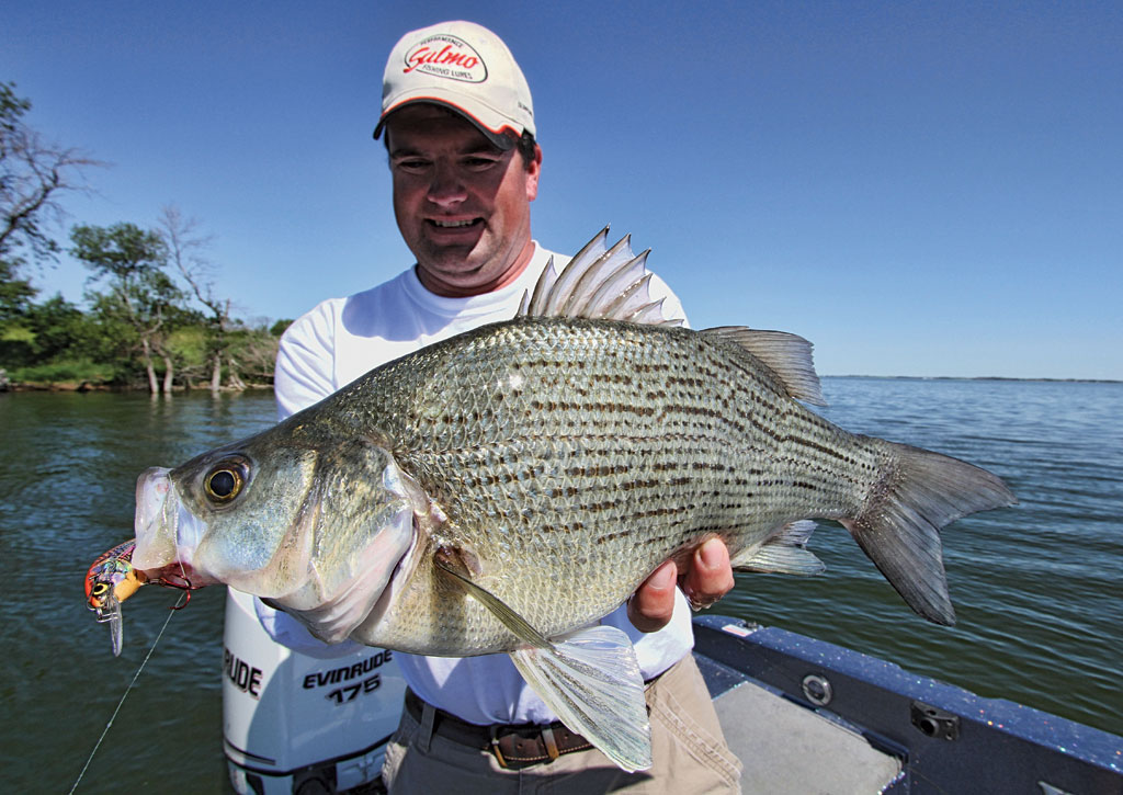 White bass length to weight conversion chart in fisherman for Best white fish