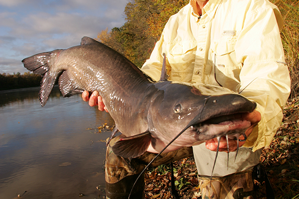 Channel Catfish Weight Conversion Chart