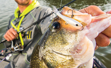 Vertical jigginng works on any bass species. Here's some great vertical jigging tips to put more bass in the boat.