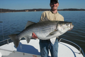 striped-bass-matt-morgan-landenberg-pa-54-inches-in-fisherman