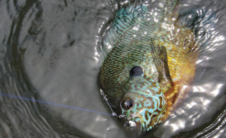 One key to success in fishing is selecting the proper presentation style. Many panfish anglers,