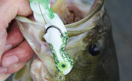 Topwater frogs have been catching big bass for years. They deserve a special spot in your tackle box.
