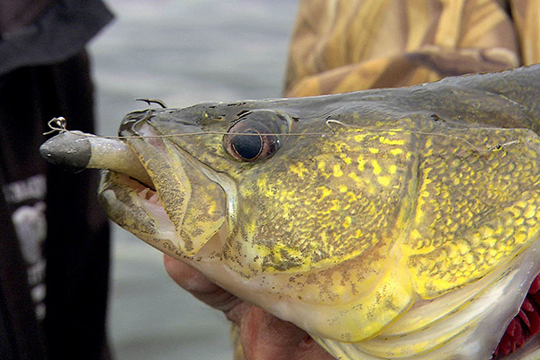 Canada for Record Walleye